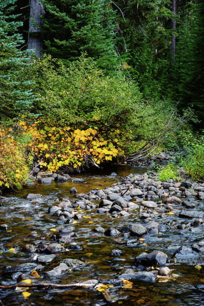 Kittitas County Wall Art - Photograph - Early Autumn Colors, Upper Little Naches River, Washington, 2016 by Steve G Bisig