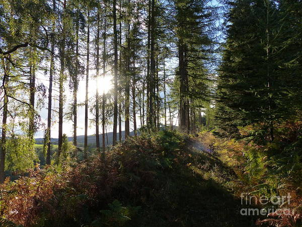Photograph - Early Autumn Forest  by Phil Banks