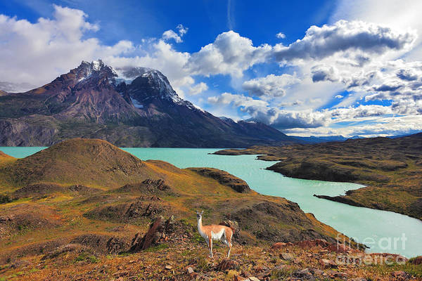 Del Photograph - Early Autumn In Patagonia. National by Kavram