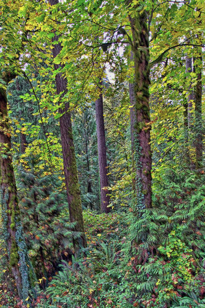 Camera Raw Photograph - Early Autumn, Oregon Woods by Brenton Cooper