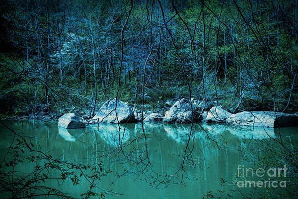 Big Basin Photograph - Early Blue Morning by Spokenin RED