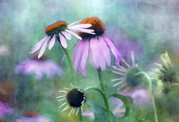 Photograph - Early Coneflowers 19 7199 Idp_2 by Steven Ward