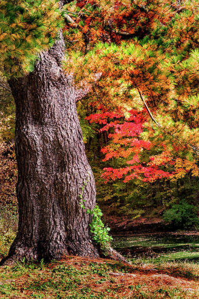 Photograph - Early Fall In Maryland by Don Johnson