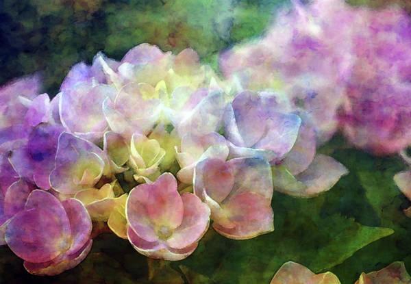 Photograph - Early Hydrangea 6287 Idp_2 by Steven Ward