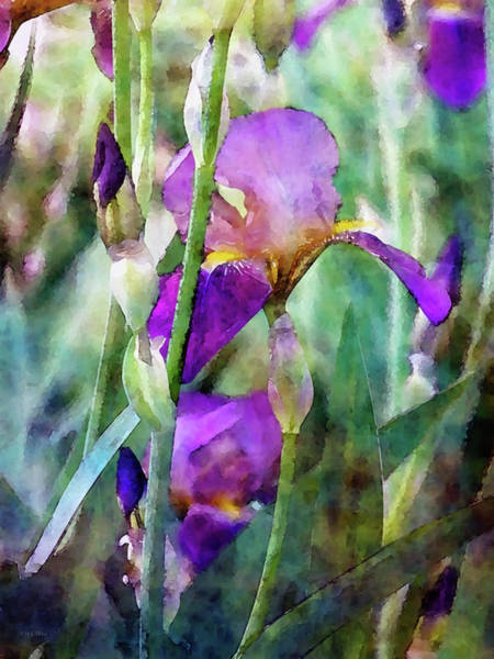 Photograph - Early Irises 6818 Idp_2 by Steven Ward