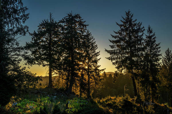 Photograph - Early Light by Bill Posner