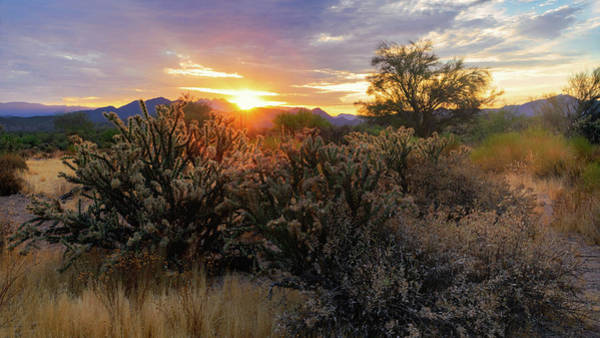 Wall Art - Photograph - Early Morning Desert Light  by Saija Lehtonen