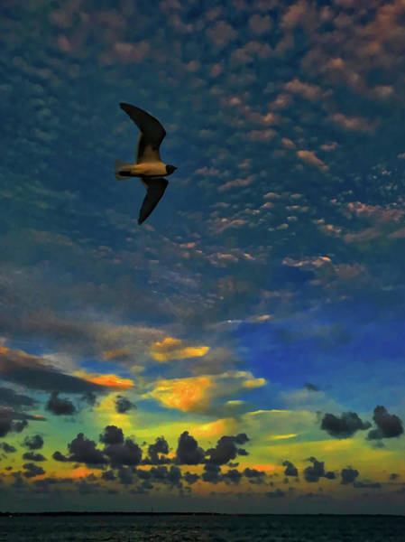 Photograph - Early Morning Fly-by by Jack Wilson