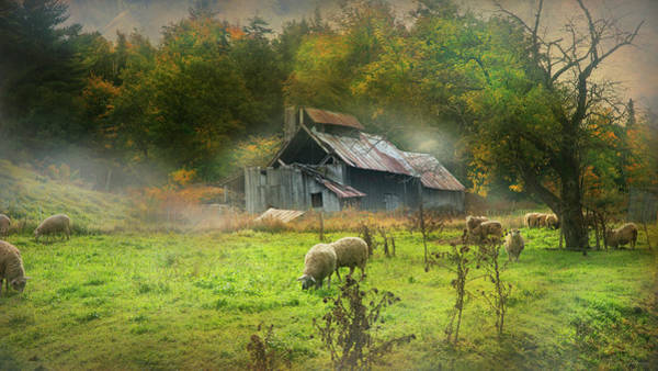 Photograph - Early Morning Grazing by John Rivera