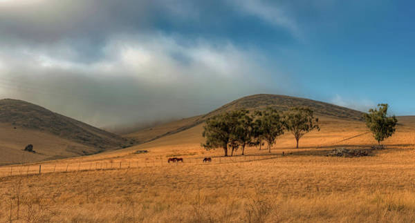 Wall Art - Photograph - Early Morning - Horses In The Meadow by Mountain Dreams