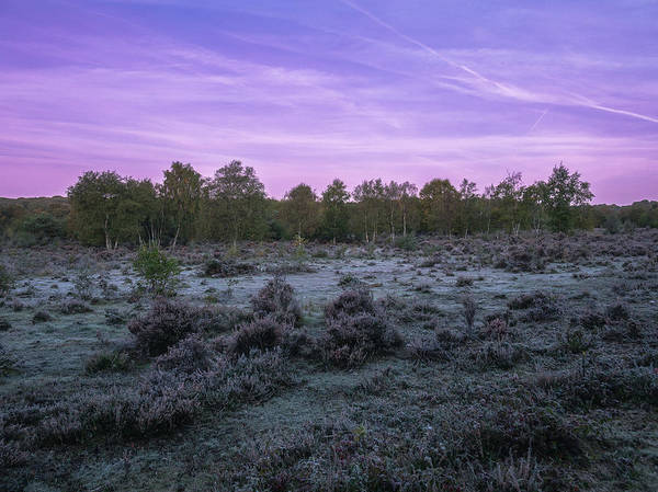 Heath Photograph - Early Morning In Sutton Park by Chris Fletcher