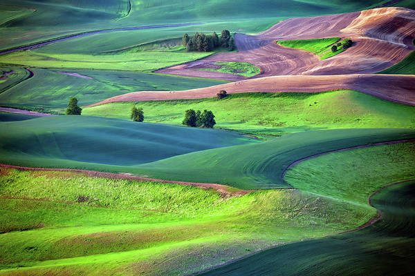 Photograph - Early Morning In The Palouse by Rick Berk