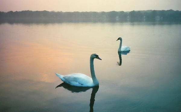 Photograph - Early Morning by JAMART Photography