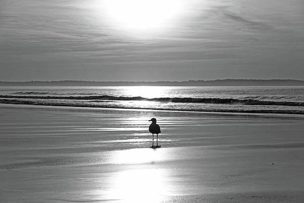 Wall Art - Photograph - Early Morning Seagull At Sunrise On Old Orchard Beach Maine Black And White by Toby McGuire