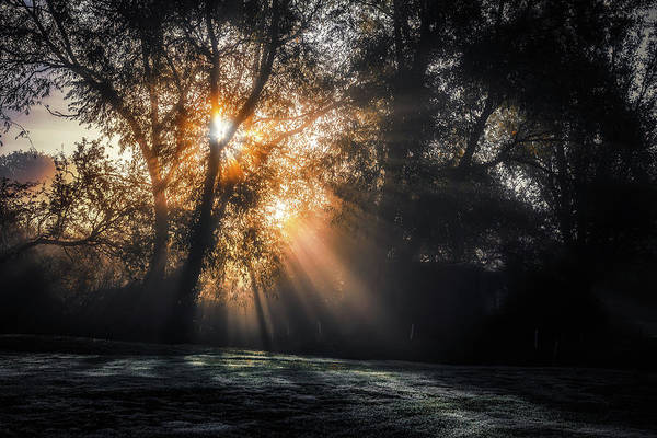 Photograph - Early Morning Sunrays No 1 by Chris Fletcher