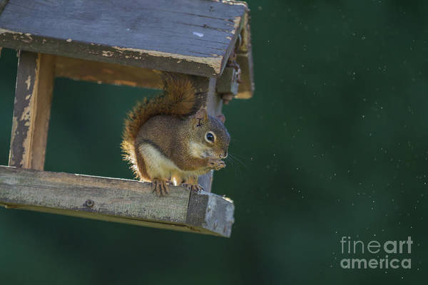 Photograph - Early Morning Visitor by Eva Lechner