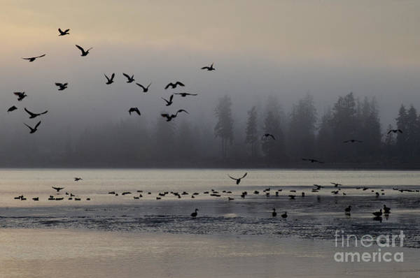 Wall Art - Photograph - Early Risers  by Bob Christopher