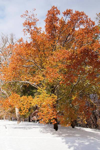 Photograph - Early Snow by Steve Stuller