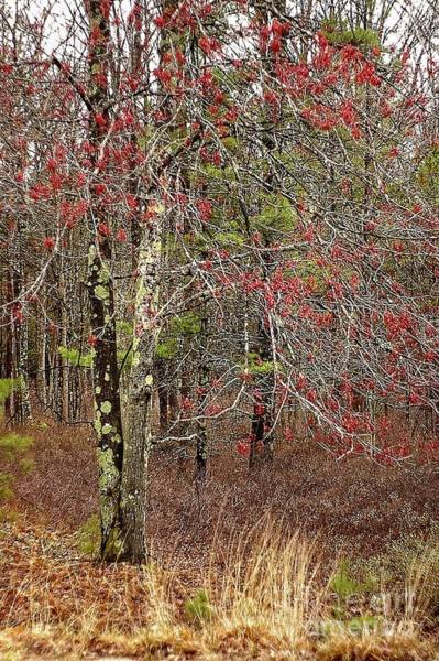 Manistee National Forest Wall Art - Photograph - Early Spring In The Forest by Randy Pollard