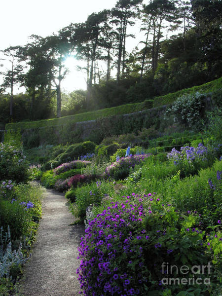 Photograph - Early Summer At Inverewe Garden by Phil Banks