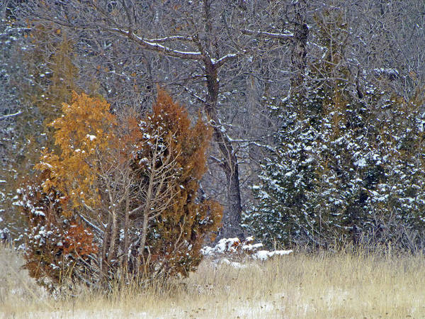 Photograph - Early Winter On The Western Edge by Cris Fulton