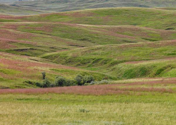 Wall Art - Photograph - East Montana Grasslands by Leland D Howard