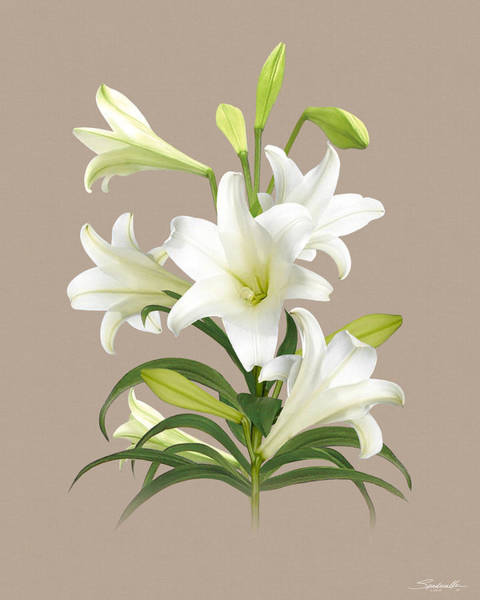 Wall Art - Digital Art - Easter Lily by M Spadecaller