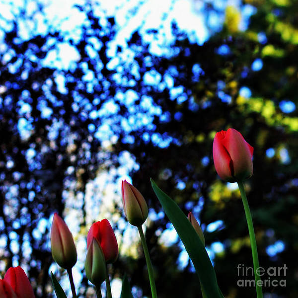 Photograph - Easter Sunday Silence by Frank J Casella