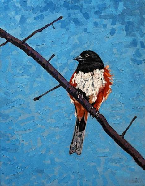Wall Art - Painting - Eastern Towhee by Phil Chadwick