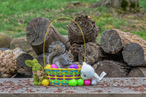 Photograph - Eating In The Easter Basket by Dan Friend