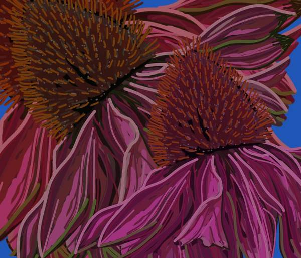 Drawing - Echinacea Flower Blues by Joan Stratton