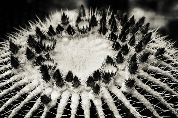 Photograph - Echinocactus Grusonii. Cacti Geometry 2 B W by Jenny Rainbow