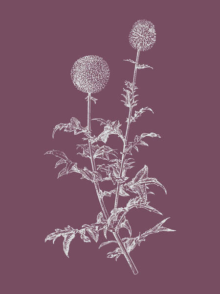 Bouquet Mixed Media - Echinopos Purple Flower by Naxart Studio