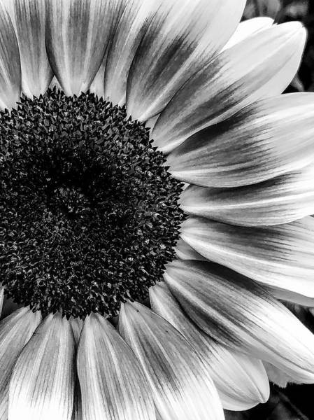 Wall Art - Photograph - Eclipse  by Katherine Taibl