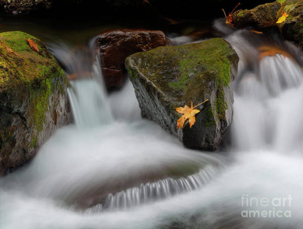 Wall Art - Photograph - Edge Of The Torrent by Mike Dawson