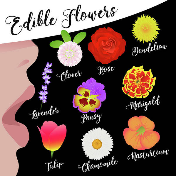 Wall Art - Digital Art - Edible Flowers by Claire Huntley