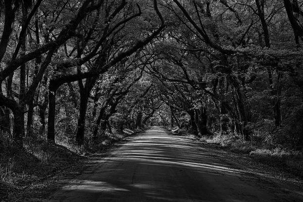 Photograph - Edisto Tunnel Of Trees by Jon Glaser