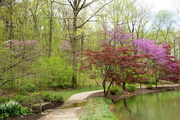 Photograph - Edith Carrier Arboretum Pathway by Allen Nice-Webb