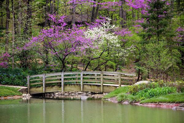 Photograph - Edith_carrier_arboretum by Allen Nice-Webb