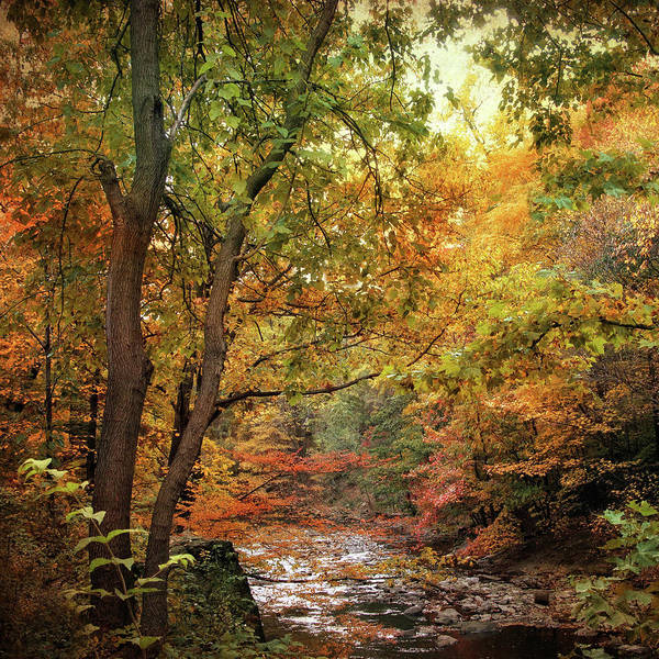 Wall Art - Photograph - Autumn Stream II by Jessica Jenney