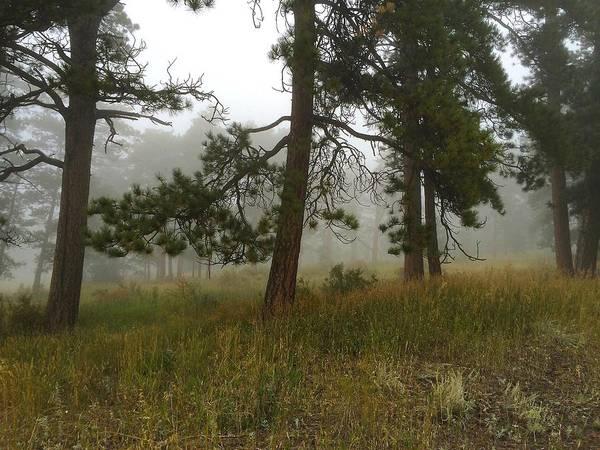 Photograph - Eerie Woodland by Dan Miller