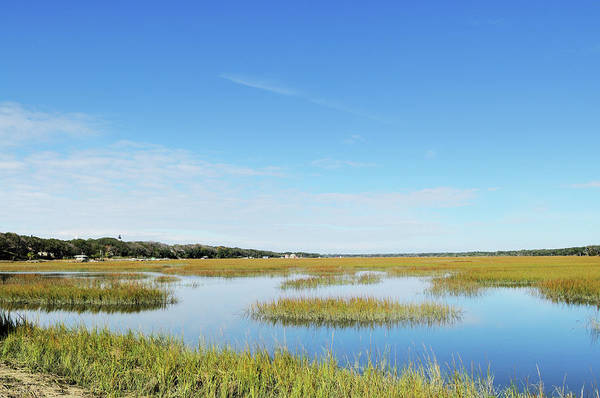 Photograph - Egan Creek Greenway Marsh And Amelia by Purdue9394