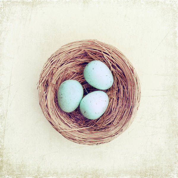 Birds Eggs Photograph - Eggs Bird Nest by Carolyn Cochrane