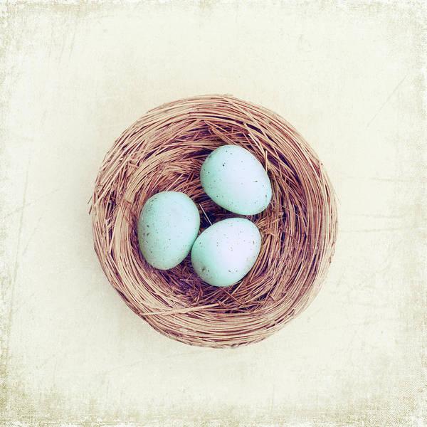 Birds Nest Photograph - Eggs Bird Nest by Carolyn Cochrane