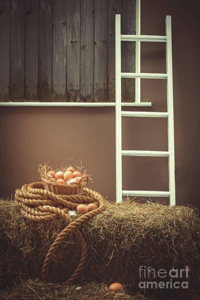 Wall Art - Photograph - Eggs In Barn by Amanda Elwell