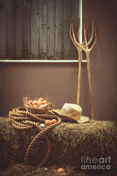 Wall Art - Photograph - Eggs In Basket In The Barn by Amanda Elwell