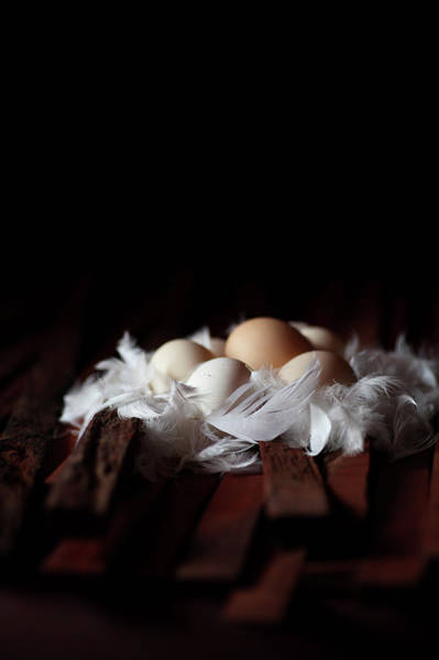 Municipality Photograph - Eggs On Feathers by Feryersan