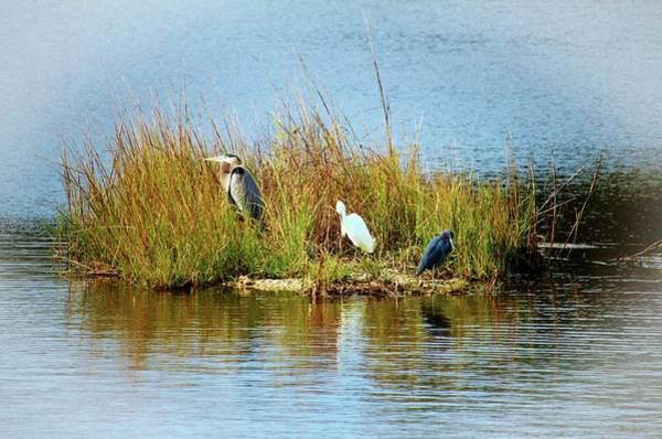 Photograph - Egret And Herons by Cynthia Guinn