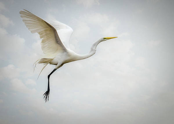 Delaware Photograph - Egret by Diana Kehoe Photography