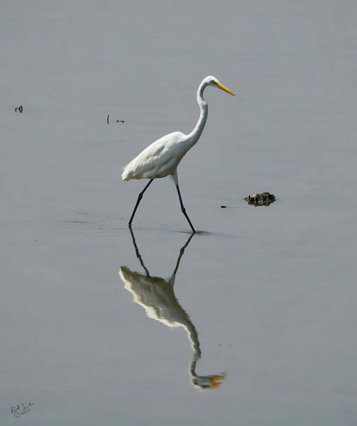 Photograph - Egret In A Pond by Rick Lawler